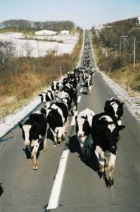 chemin béton chavhes laitières